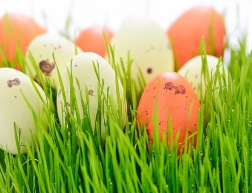 Was war zuerst, die Henne oder das Ei?