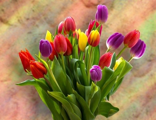 Tulpen statt Tiramisu